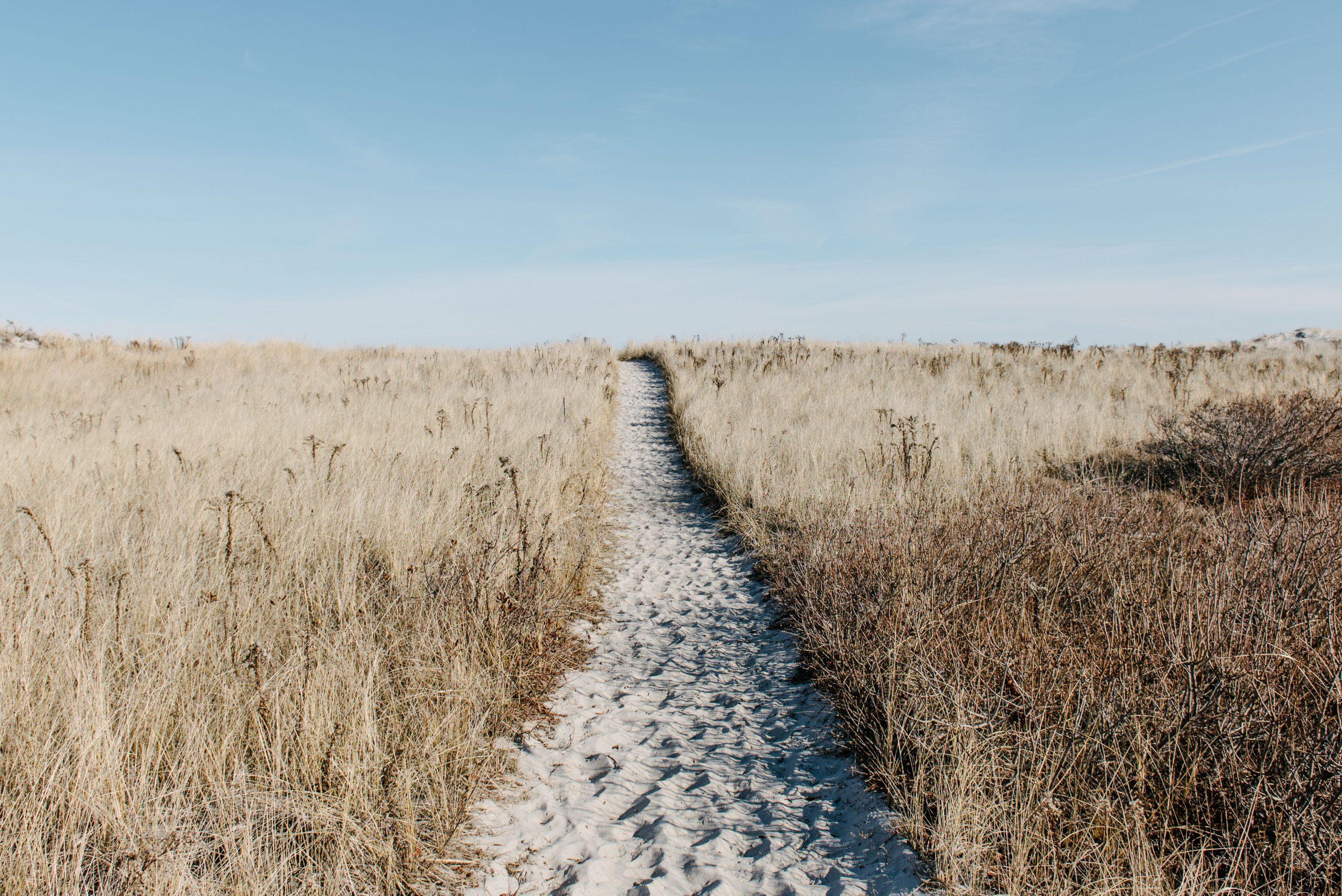 Sandy path through tall grass leading over a hill