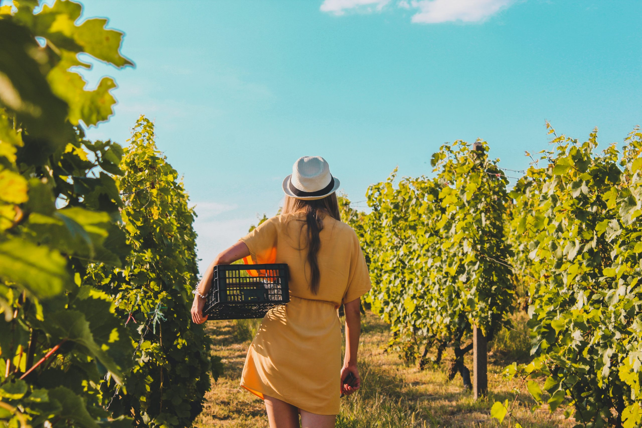 Young woman walking through fruit trees with a basket
